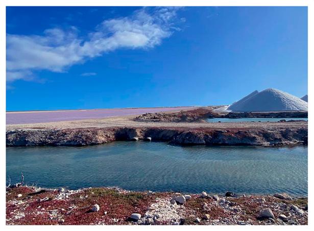 Salt Cargill Bonaire